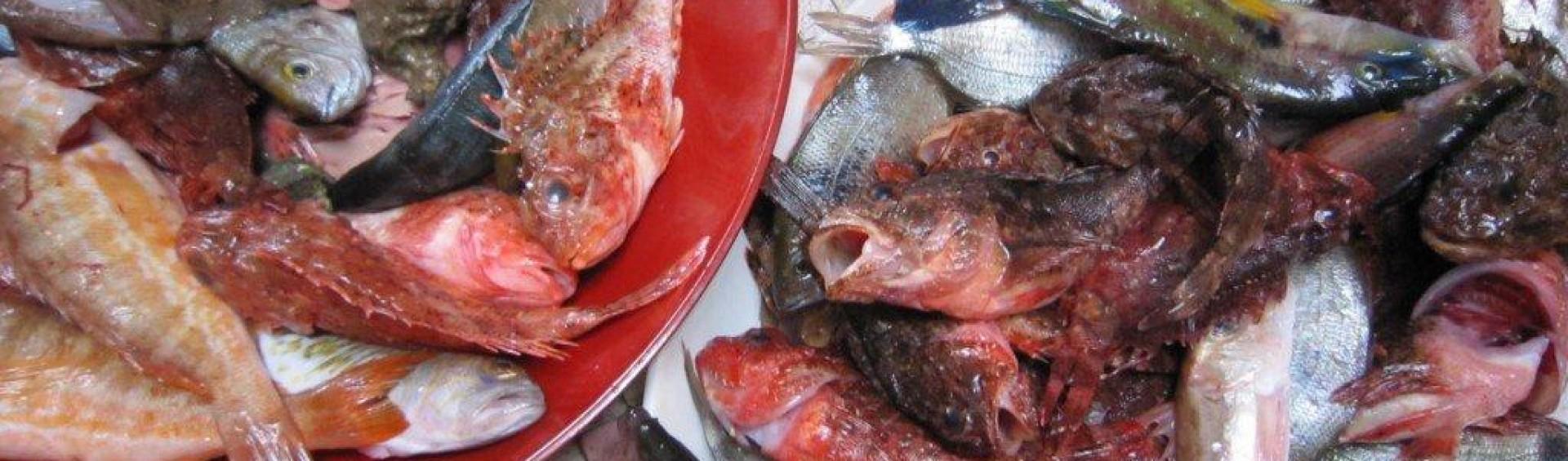 les poissons de bouillabaisse