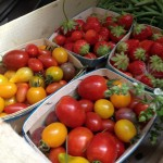tomates multicolores