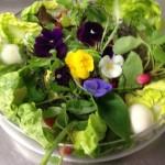 Dégutation salade fraicheur