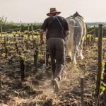 labour à cheval
